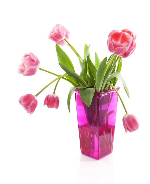 Dutch Tulips In Pink Vase Over White Background Wall Mural Pixers