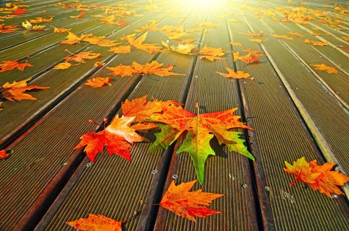 Vinylová Tapeta Podzimní listí sluneční paprsky - Témata