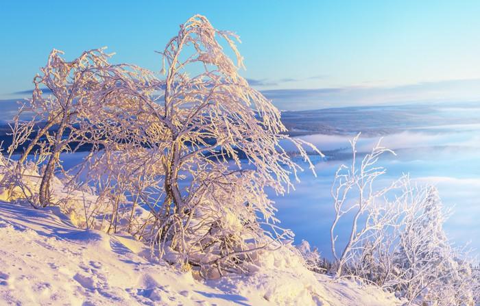 Vinylová Tapeta Frozen strom - Prázdniny