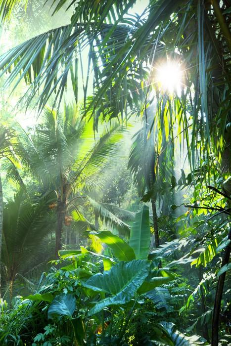 Fototapeta Dżungla Pixers 174 Żyjemy By Zmieniać