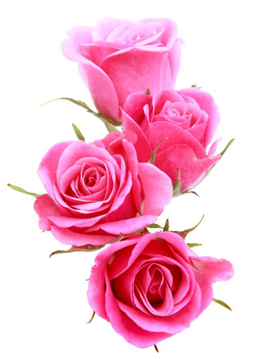Pink Rose Flower Bouquet Isolated On White Background Cutout Wall Mural Pixers 174 We Live To