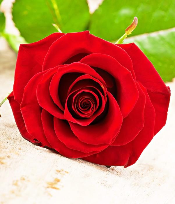 Vinylová Tapeta Červená růže - Prodej