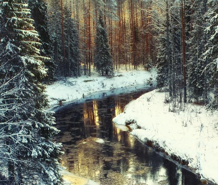 Vinylová Tapeta Studené zimní lesní krajiny sníh - Prázdniny