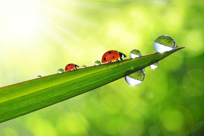 fresh morning dew and ladybirds Vinyl Wallpaper - Seasons