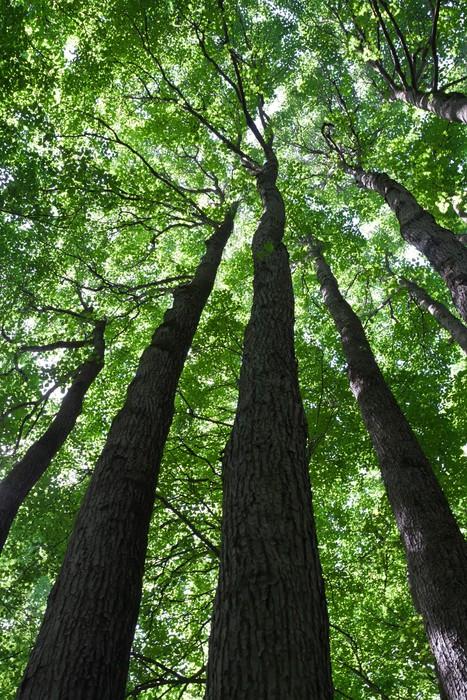 Vinylová Tapeta Zelený les - Roční období