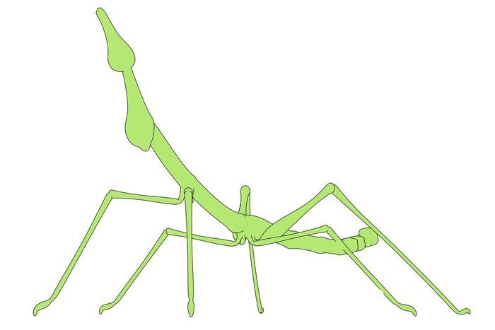 Carta da parati immagine cartone animato di insetto stecco