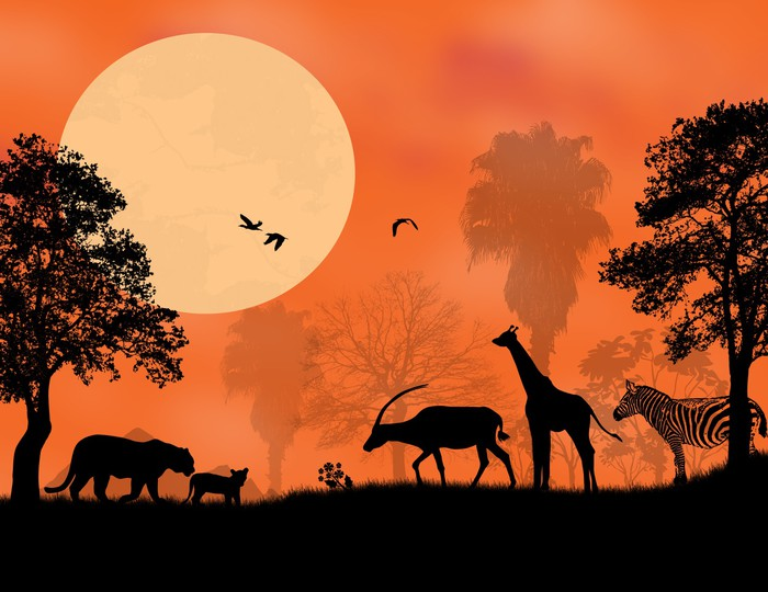 Sunset Safari Wall Mural Pixers We live to change