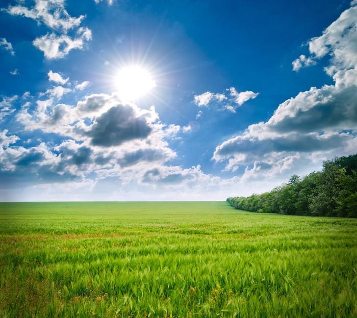 Plakát Zelená louka pšenice. Složení přírody. - Zemědělství