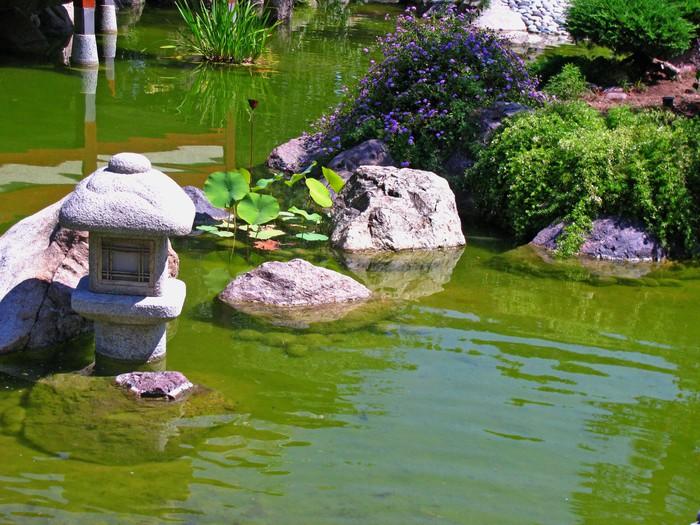 Papier peint vinyle Étang dans un jardin japonais - Eau