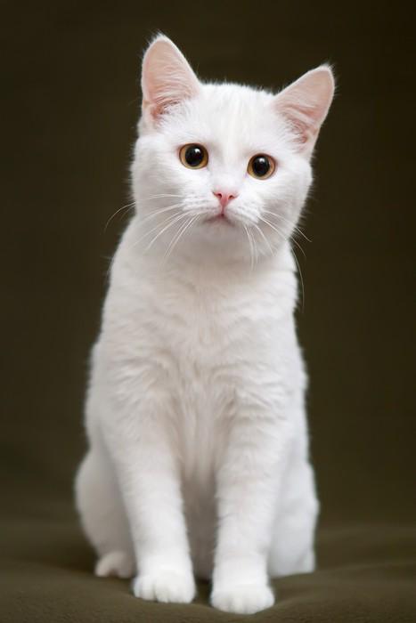 sticker beau chat blanc avec des yeux jaunes assis sur la couverture pixers nous vivons. Black Bedroom Furniture Sets. Home Design Ideas