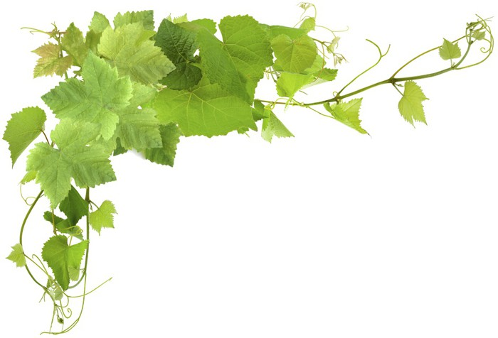 Carta da parati foglie di vite pixers viviamo per il cambiamento - Feuille de vigne dessin ...