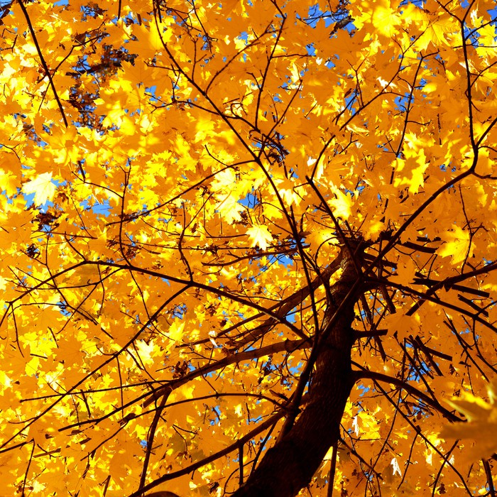 Autumn wall mural pixers we live to change for Autumn wall mural