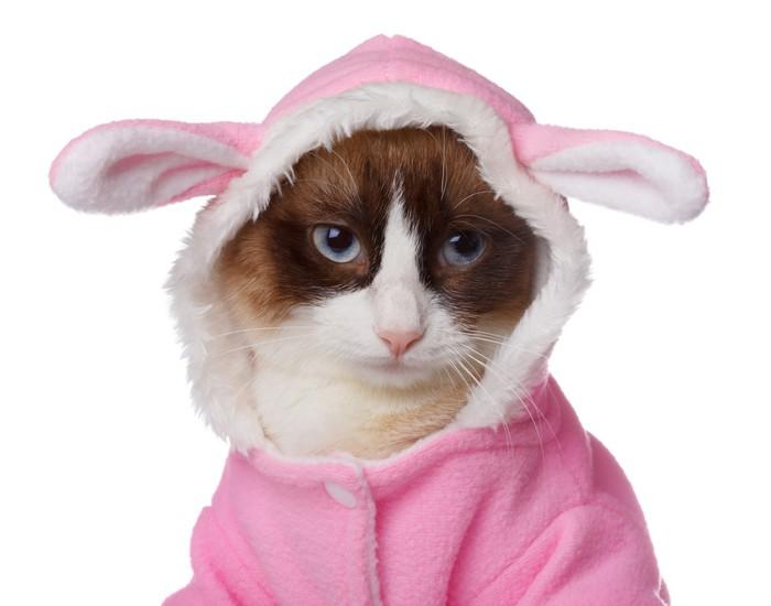 Vinylová Tapeta Kočka v růžovém kostýmu králíka izolovaných na bílém - Doplňky