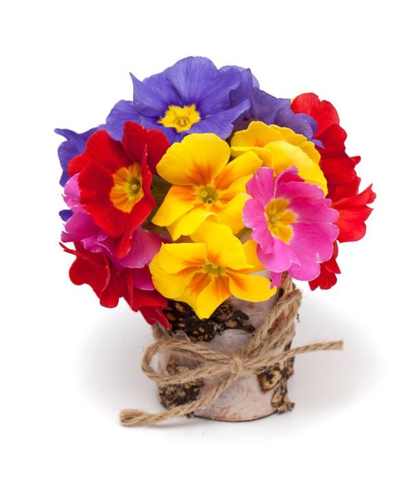 Vinylová Tapeta Kytice květů Primula - Květiny
