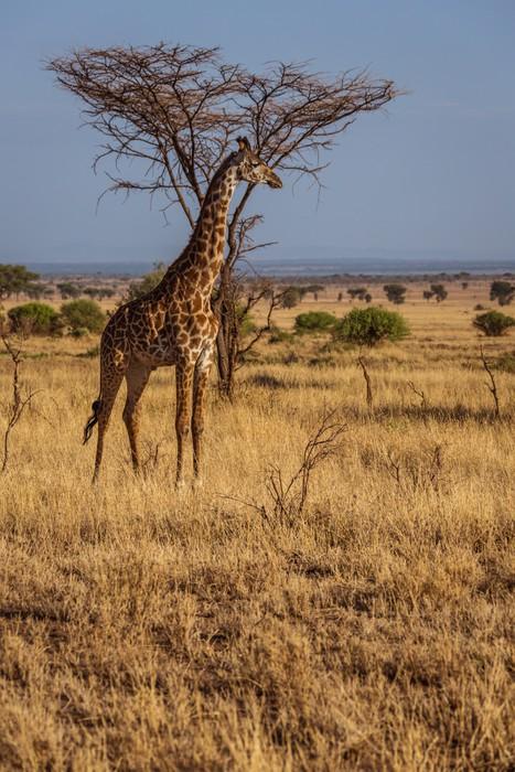 tableau sur toile girafe africaine pixers nous vivons pour changer. Black Bedroom Furniture Sets. Home Design Ideas