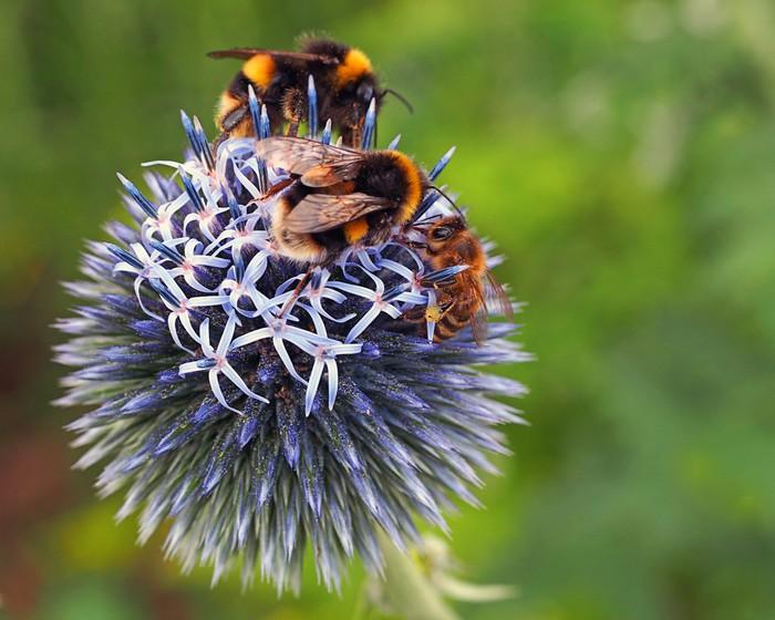 Vinylová Tapeta Včely - Ostatní Ostatní