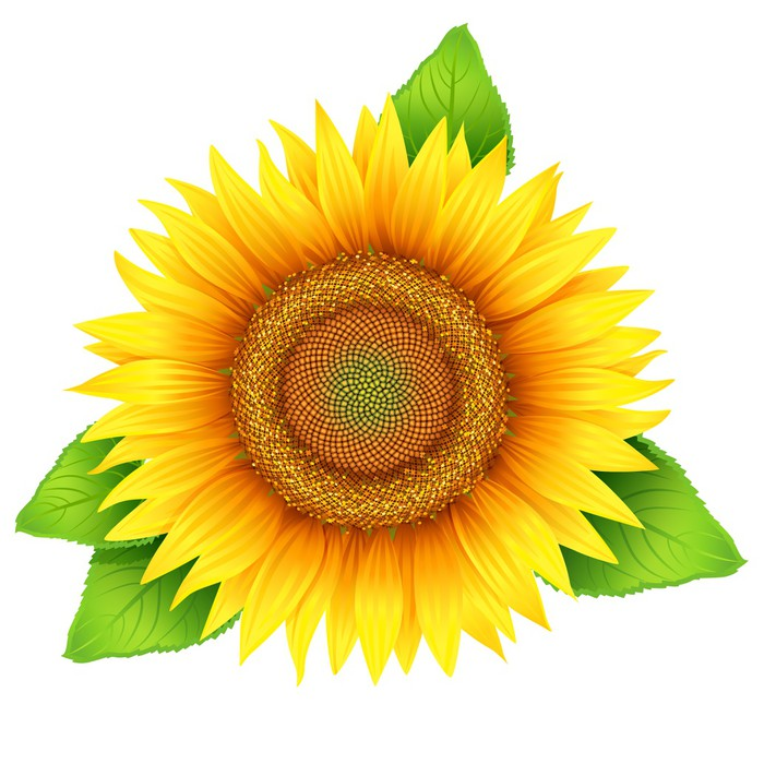 fototapete bl ten von sonnenblumen mit bl ttern isoliert. Black Bedroom Furniture Sets. Home Design Ideas