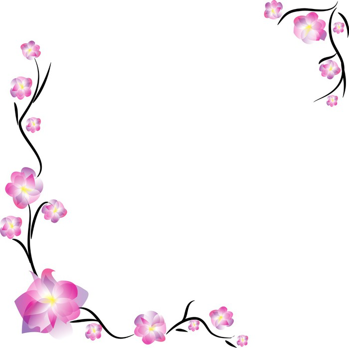 Sakura frame, isolated on white Wall Mural • Pixers® • We live to change