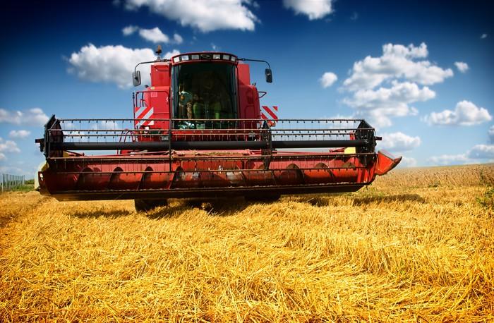 Vinylová Tapeta Kombajn sklizeň pšenice na slunné letní den - Zemědělství