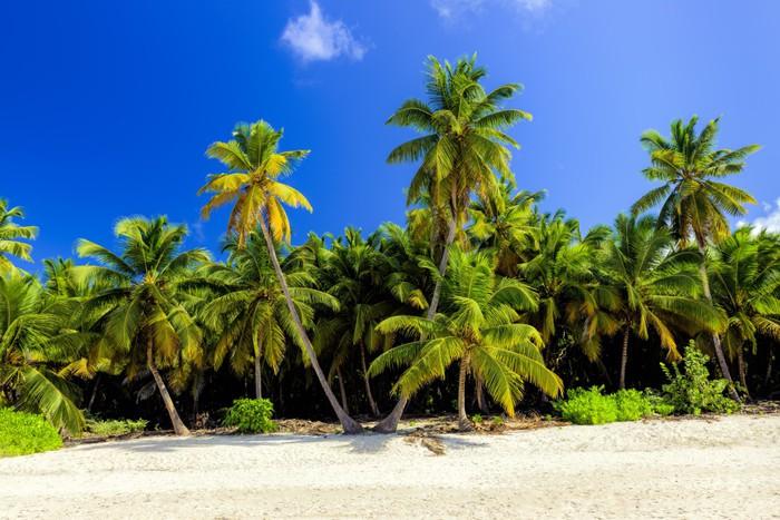 Vinylová Tapeta Caribbean divoké pláže, Punta Cana - Amerika