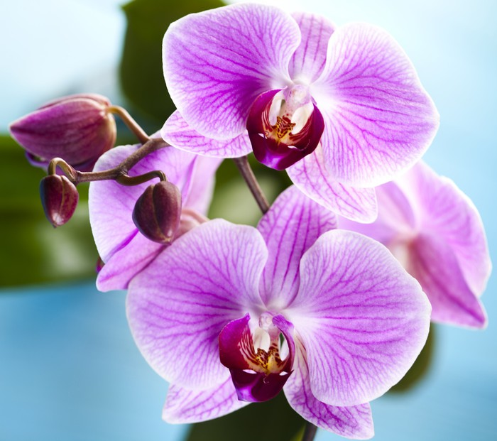 Vinylová Tapeta Krásné orchideje - Témata