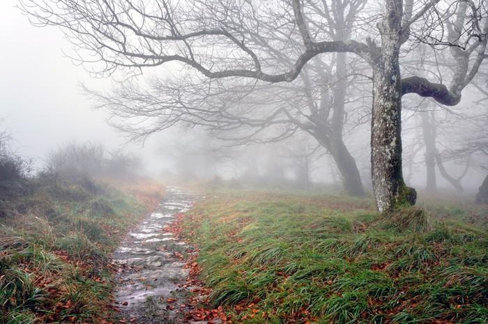 Vinylová Tapeta Stezka v lese s tajemnými stromy - Témata