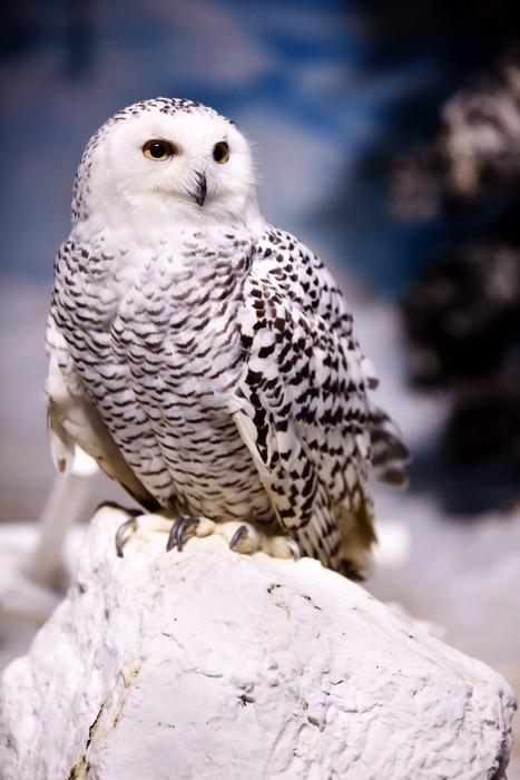Nálepka Pixerstick Sovice sněžní - Témata