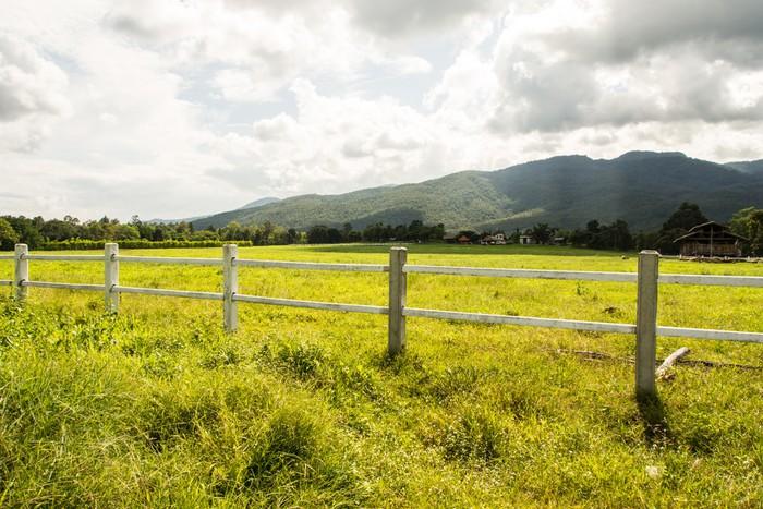 Vinylová Tapeta Zelené pastviny koňských farem - Savci