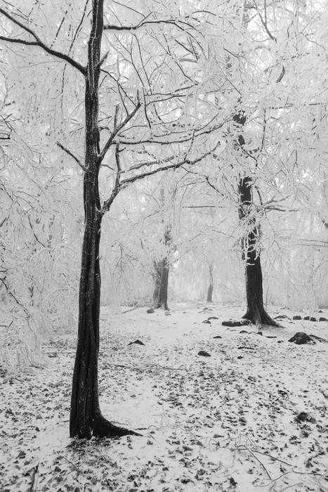 Vinylová Tapeta Zimní les v mlze - Roční období