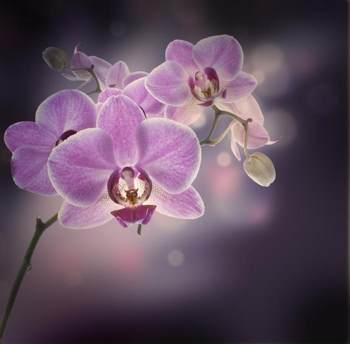 Vinylová Tapeta Květinové pozadí tropických orchidejí - Témata