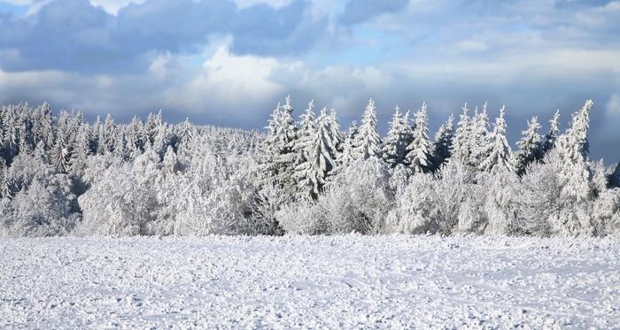 Vinylová Tapeta Smrk pokryté sněhem. Zimní krajina. - Roční období