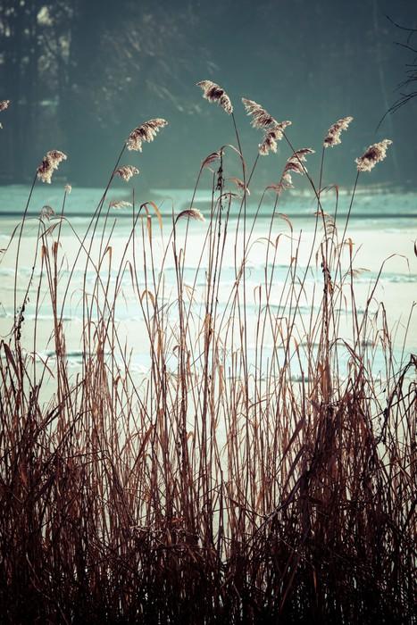 Nálepka Pixerstick Detailní záběr na suché trávy v mrazu a stín na sněhu - Roční období