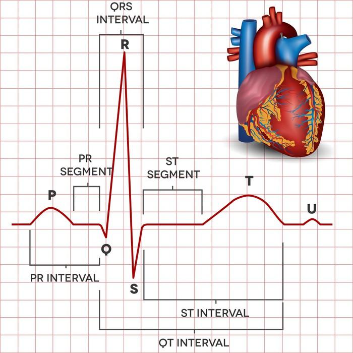 Großzügig Das Menschliche Herz Diagramm Beschriftet Ideen ...