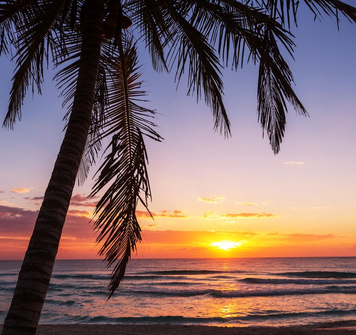Papier Peint à Motifs Vinyle Tropical beach - Vacances