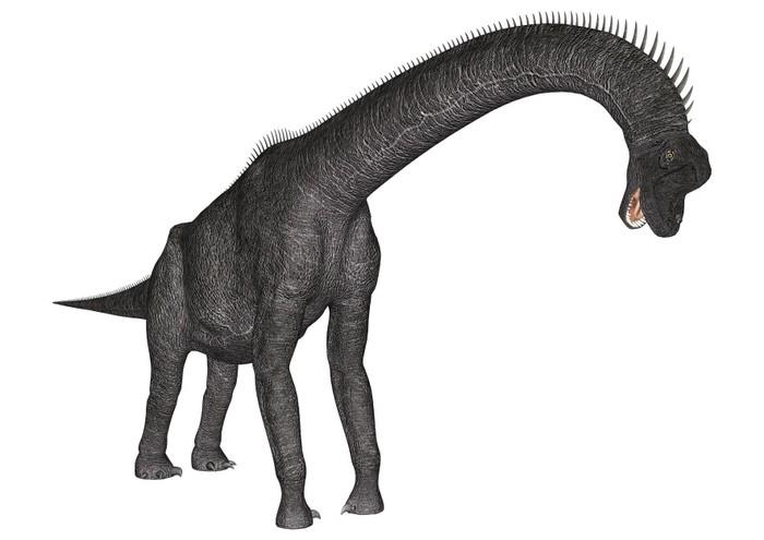 papier peint dinosaure brachiosaurus pixers nous. Black Bedroom Furniture Sets. Home Design Ideas