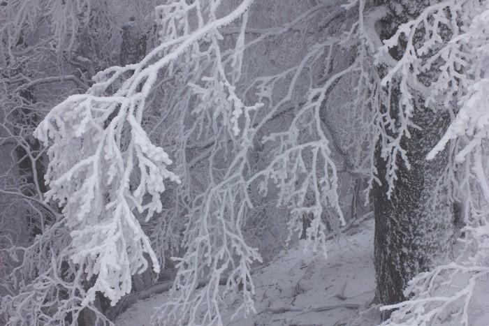Vinylová Tapeta Zimní krajina - Roční období