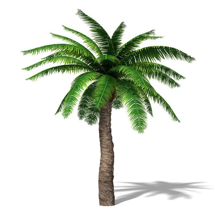Vinilo Pixerstick 3d ilustración de una palmera • Pixers® - Vivimos ...