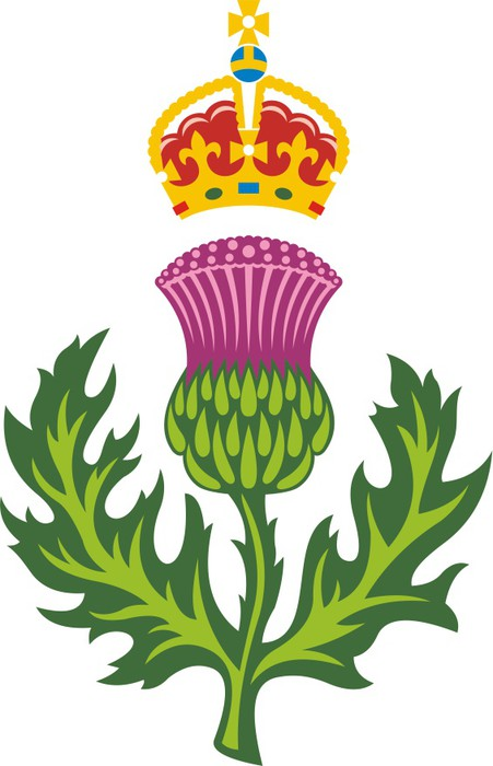 Scottish Thistle Mbol Of Scotland Wall Mural Pixers We Live