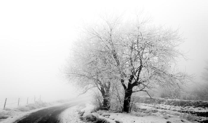 Vinylová Tapeta Mrazivý stromy na blátivé cesty - Roční období