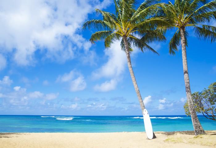 fototapete coconut palme mit curfboard in hawaii pixers. Black Bedroom Furniture Sets. Home Design Ideas