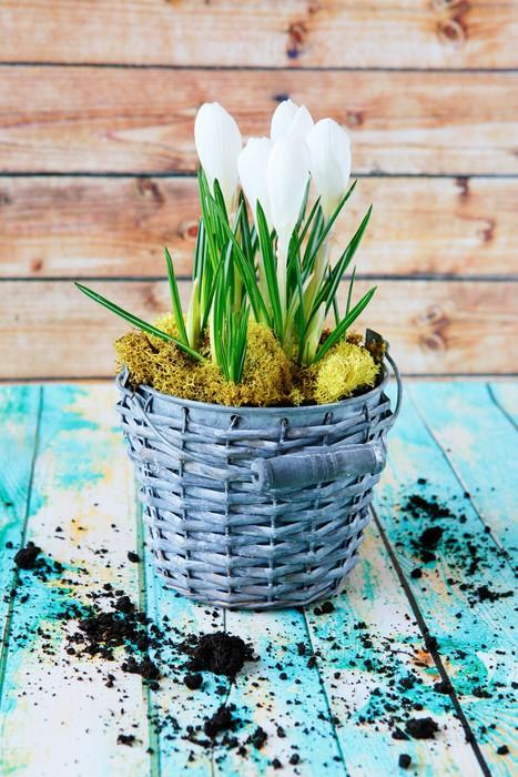Vinylová Tapeta Jarní květiny, bílý šafrán - Národní svátky