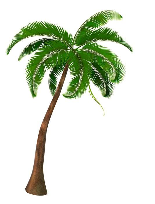 naklejka palma wektor  u2022 pixers u00ae  u2022  u017byjemy by zmienia u0107 coconut tree clip art for address label coconut tree clip art free images
