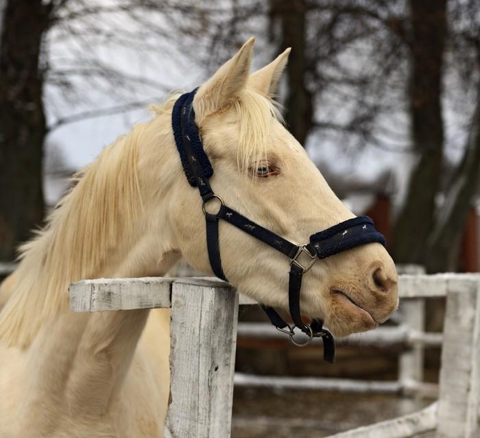 papier peint cheval albinos pixers nous vivons pour changer. Black Bedroom Furniture Sets. Home Design Ideas