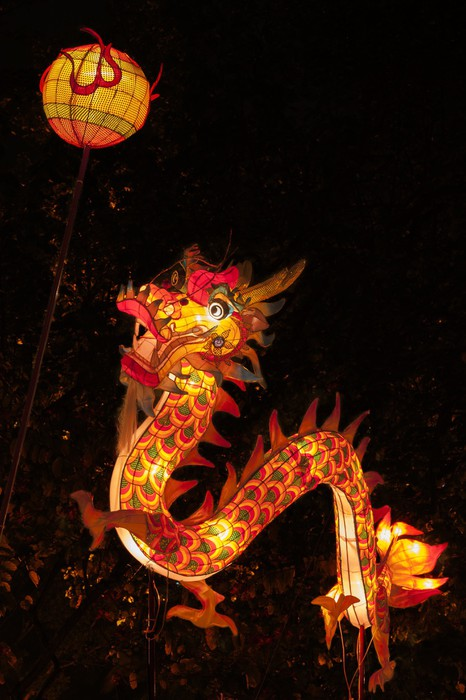 dragon lantern for chinese new year celebration vinyl wall mural themes