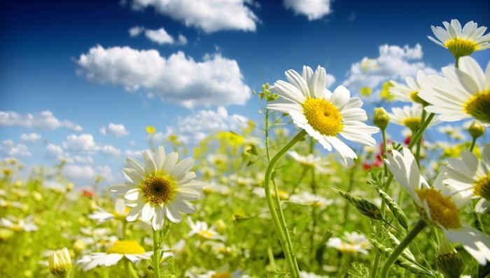 Vinylová Tapeta Letní květy - Květiny