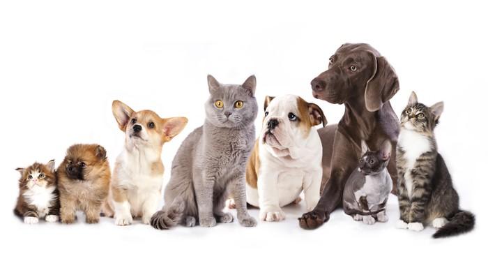 Risultati immagini per cane autunno sfondo bianco