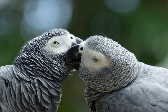 Vinylová Tapeta Papoušek pták - Ptáci