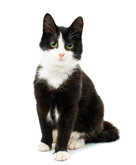 Sticker noir et blanc chat pixers nous vivons pour for Salon chat sexe
