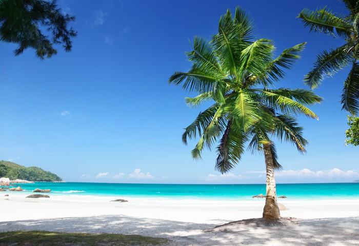 Vinylová Tapeta Anse Lazio Beach Ostrov Praslin, Seychely - Palmy