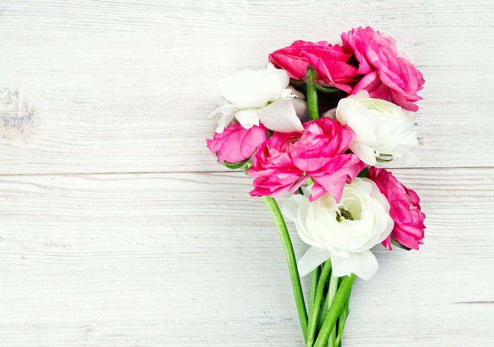 Papier Peint à Motifs Vinyle Ranunculus fleurs roses et blanches sur la surface woode - Fleurs